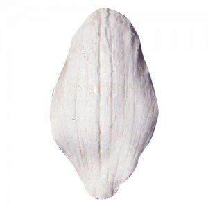 SK Orchid.-Cymbidium - Petal-Veiner