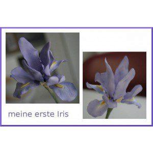 EA Powder Dusting Colours - Iris
