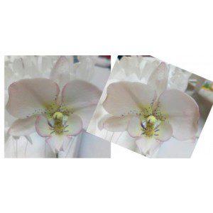 Zuckerblumenkurs - Orchidee
