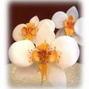 PME Ausstecher Orchidee Moth, 3-teilig