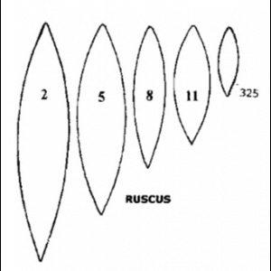 TT Ruscus leaf, 5-teilig