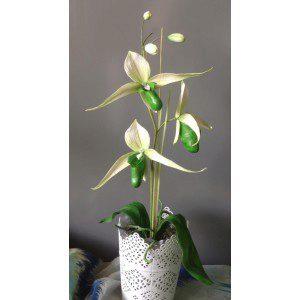 Zuckerblumenkurs - Slipper Orchid - 24./25.11. mit Ingrid