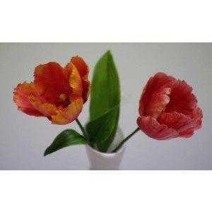 Blooms Tulip Petal, Tulpen-Veiner