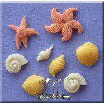 AM Shells & Starfish - Muscheln & Seesterne