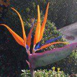 Framar Cutters - Bird of Paradise