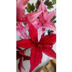 Zuckerblumenkurs - Lilien mit Bambus - 17.11.