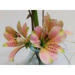 Fine Cut - Mariposa Lily, 2-teilig