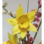 Zuckerblumenkurs - weiße und gelbe Narzissen - 16./17.3.